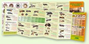 Kompakte Bestimmungshilfe – Bienen & Wespen in Nisthilfen
