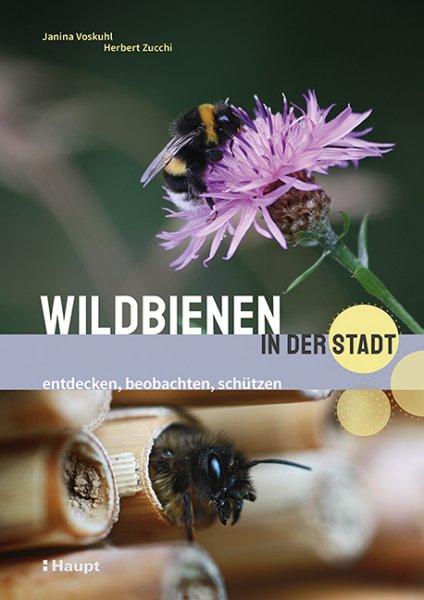 Wildbienen in der Stadt