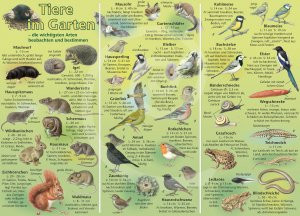 Bestimmungshilfe – Tiere im Garten
